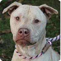 Adopt A Pet :: LYNETTE - Red Bluff, CA