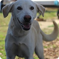 German Shepherd Dog Mix Dog for adoption in Von Ormy, Texas - Jingles