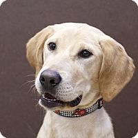 Adopt A Pet :: Mattie - Ile-Perrot, QC