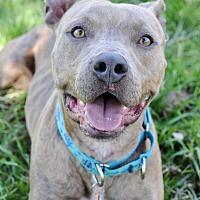 Adopt A Pet :: Nolan - College Station, TX