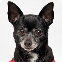 Adopt A Pet :: Willie - Westfield, NY