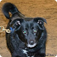 Adopt A Pet :: Anna - Ortonville, MI