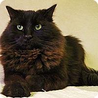 Adopt A Pet :: Hendrix - Pittstown, NJ