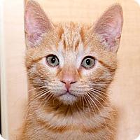 Adopt A Pet :: Perseus - Irvine, CA