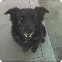 Adopt A Pet :: Sophie - Fowler, CA