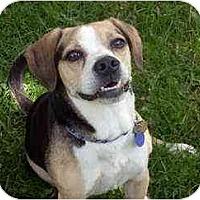 Adopt A Pet :: Snoop - Novi, MI