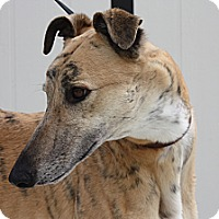 Adopt A Pet :: Phineas - Rancho Santa Margarita, CA
