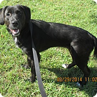 Adopt A Pet :: Sierra - Orange Park, FL