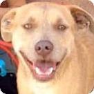 Adopt A Pet :: JONESY (video)