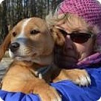 Adopt A Pet :: Jordan - Marlton, NJ
