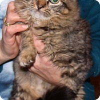 Adopt A Pet :: Foo Foo - Centralia, WA