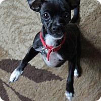 Adopt A Pet :: Olivia - Lynnwood, WA