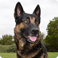 Adopt A Pet :: Murphy - San Diego, CA