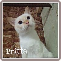 Adopt A Pet :: Britta - Fairbury, NE