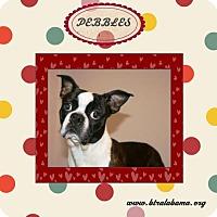 Adopt A Pet :: Pebbles - Alabaster, AL