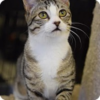 Adopt A Pet :: Molly - DFW Metroplex, TX