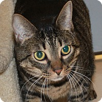 Adopt A Pet :: Olive Oyl - North Branford, CT