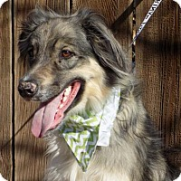 Adopt A Pet :: Maximus Prime-ADOPTED 4/16/16 - Apple Valley, CA