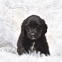 Adopt A Pet :: Trike - Groton, MA