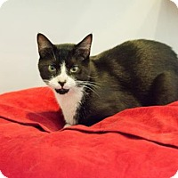 Adopt A Pet :: Kendrick - New York, NY