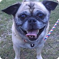 Adopt A Pet :: Peanut - Irmo, SC