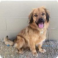 Adopt A Pet :: Sj Litter Mateo (HP) - Livonia, MI