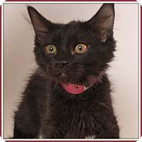 Adopt A Pet :: Elegance - Glendale, AZ