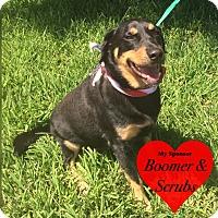 Adopt A Pet :: Bandito - San Leon, TX