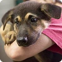 Adopt A Pet :: Gabbi - Oswego, IL