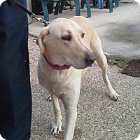 Adopt A Pet :: Moto - Whitney, TX