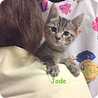 Adopt A Pet :: JADE - Cliffside Park, NJ