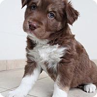 Adopt A Pet :: Zahra D162130: NO LONGER ACCEPTING APPLICATIONS - Edina, MN