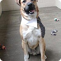 Adopt A Pet :: Endicott - McKinney, TX