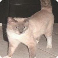 Adopt A Pet :: Ling Ling - Miami, FL