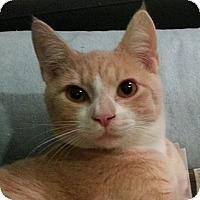 Adopt A Pet :: Bartlett - Portland, OR