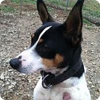Adopt A Pet :: Prissy - Athens, GA