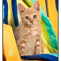 Adopt A Pet :: Oatmeal - Owensboro, KY