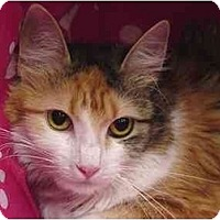 Adopt A Pet :: Maria - The Colony, TX