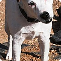 Adopt A Pet :: Nickki - Gilbert, AZ