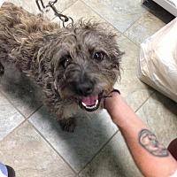 Adopt A Pet :: Einstein - Park Ridge, NJ