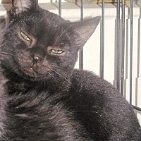 Adopt A Pet :: Inky - Stanhope, NJ