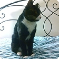 Adopt A Pet :: Tobias - Vancouver, BC