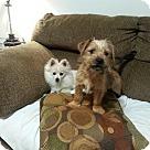 Adopt A Pet :: Pup Jasper