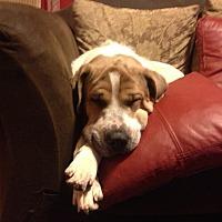 Adopt A Pet :: Mina - Mandeville, LA