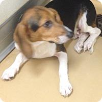 Adopt A Pet :: Jacob - Dumfries, VA