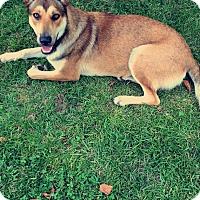 Adopt A Pet :: Luna (Guest) - Roswell, GA