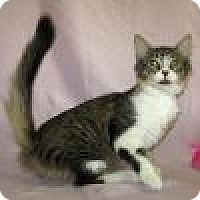 Adopt A Pet :: Pixie - Powell, OH
