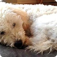 Adopt A Pet :: Layla-ADOPTION PENDING - Boulder, CO