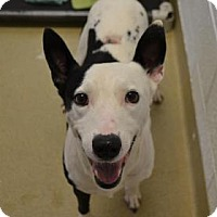 Adopt A Pet :: Barcode - Miami, FL