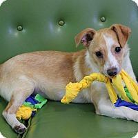 Adopt A Pet :: gordy - Dalton, GA